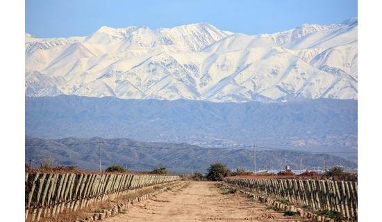 The Wines of Bodegas Otaviano, Argentina