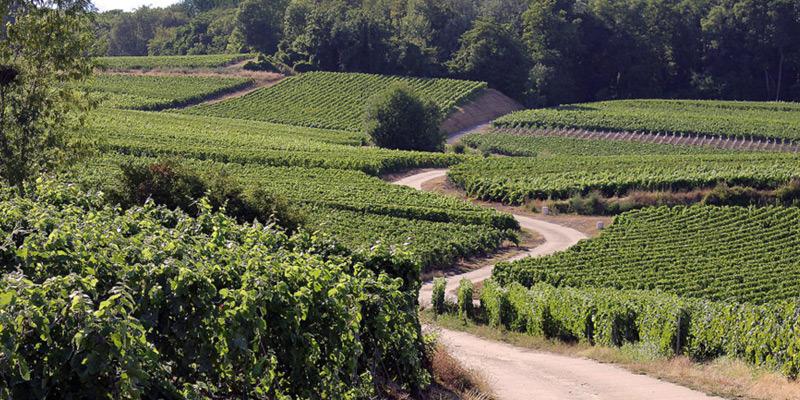 Arlaux Champagne Premier Cru, Grande Cuvée