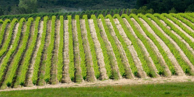 Blanc de Blancs, Domaine de la Jasse, Languedoc 2020