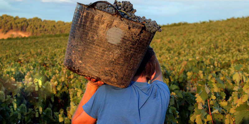 Rioja Vega Crianza Limited Edition 2017