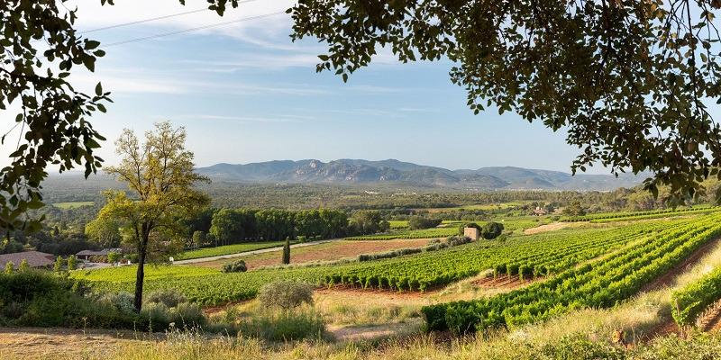Whispering Angel Rosé, Château d'Esclans, Provence 2020