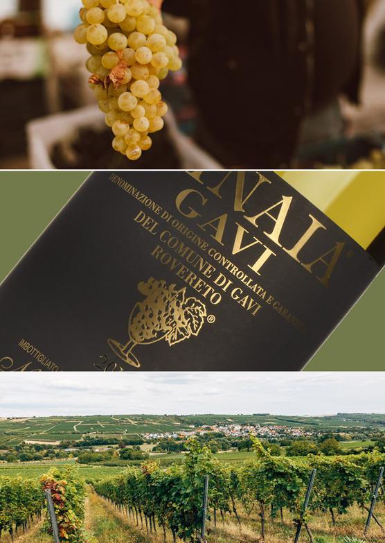 Gavi di Gavi 'La Minaia' 2019